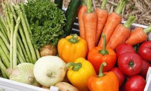 栄養療法について